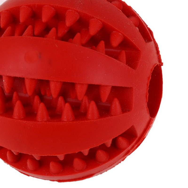 Entertaining Chewing Rubber Dog's Toy  My Pet World Store