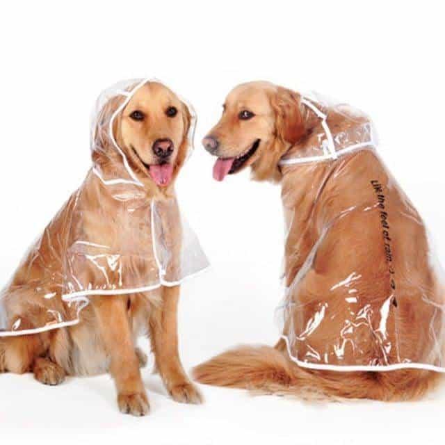 Transparent Autumn Dog Raincoat  My Pet World Store