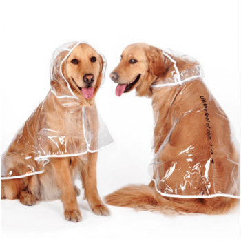 Transparent Autumn Dog Raincoat  My Pet World Store