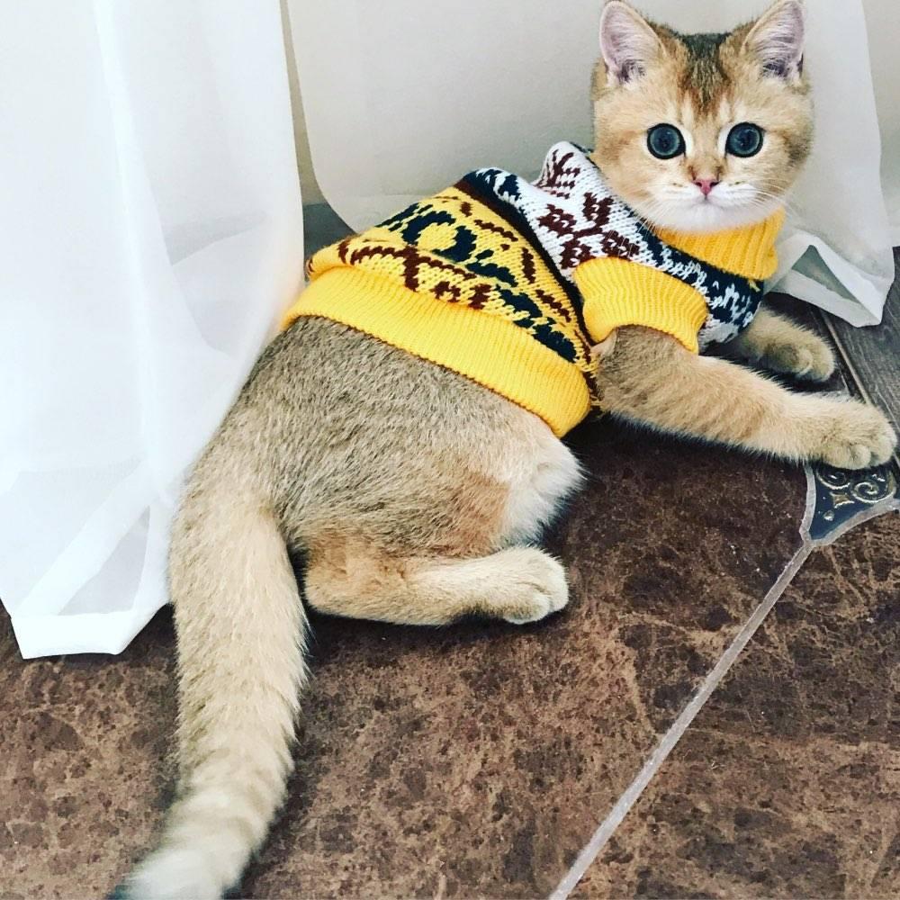 Pretty Warm & Soft Cat's Sweater  My Pet World Store