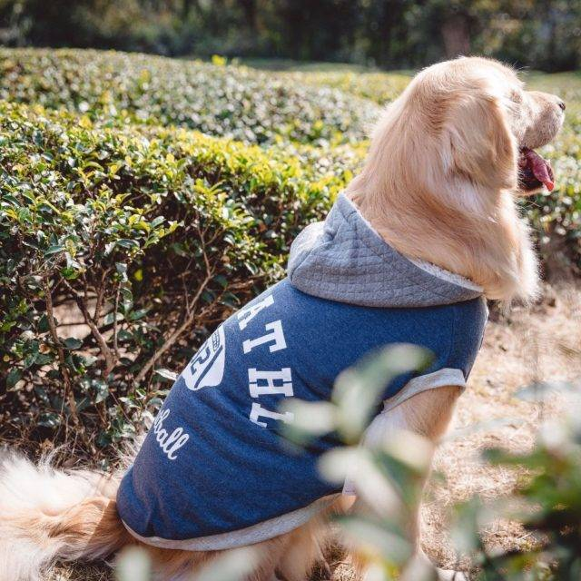 Warm Fleece Hooded Sports Vest for Big Dogs  My Pet World Store
