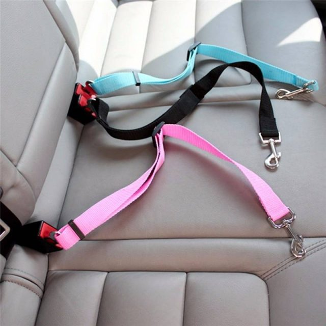 Nylon Safety Seatbelt for Pets  My Pet World Store