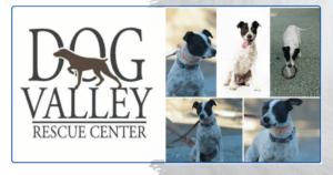 Dog Valley Rescue Center