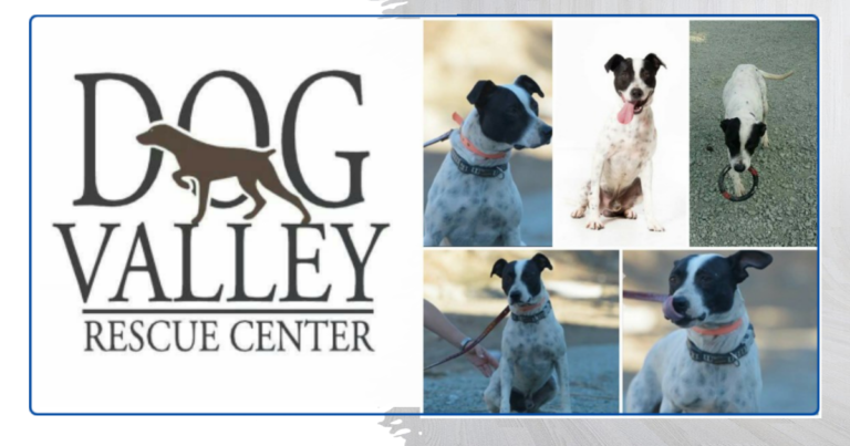 My Pet World Store DOG VALLEY RESCUE CENTER https://mypetworldstore.com/dog-valley-rescue-center/