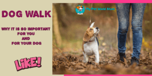Dog Walk.WHY IT IS SO IMPORTANT☝️ FOR YOU AND FOR YOUR DOG