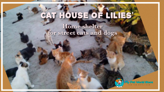 My Pet World Store 😺CAT HOUSE of LILLIE's https://mypetworldstore.com/cat-house-of-lillies/