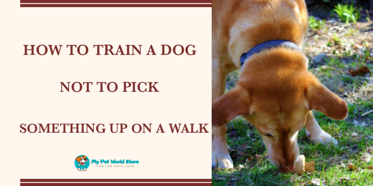 My Pet World Store How to train a dog not to pick something up on walks? https://mypetworldstore.com/?p=11579