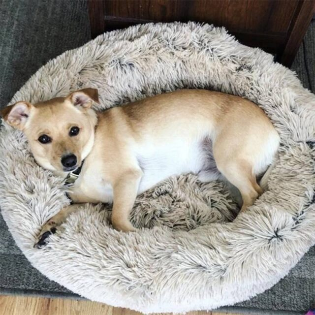 Soft Plush Donut Bed  My Pet World Store