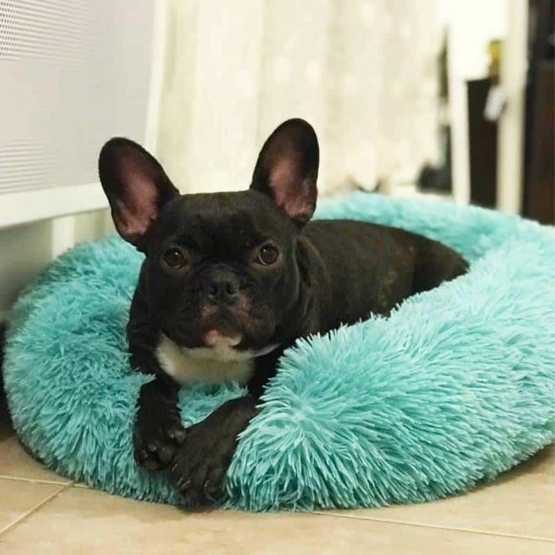 Soft Plush Donut Bed  My Pet World Store