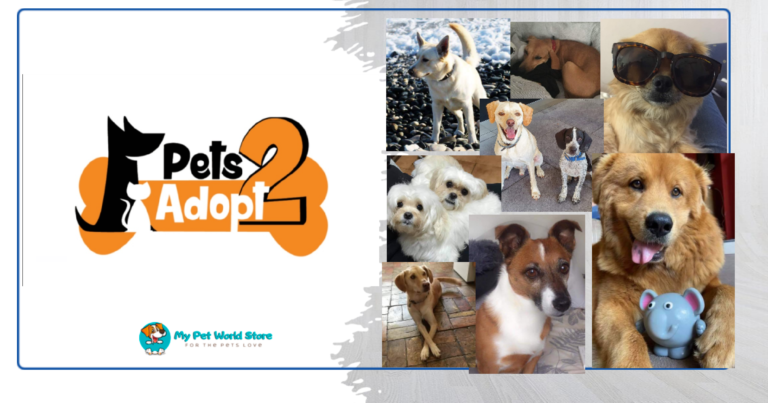 My Pet World Store PETS2ADOPT-NON-PROFITABLE ORGANISATION OF ANIMALS RESCUE AND ADOPTION https://mypetworldstore.com/?p=17244