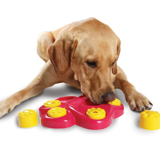 Funny Dog's Puzzle Bowl  My Pet World Store
