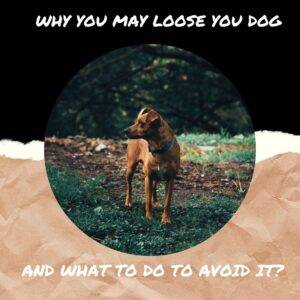 My Pet World Store 10 Reasons Why You May Loose Your Dog And What To Do To Avoid It? https://mypetworldstore.com/?p=18199