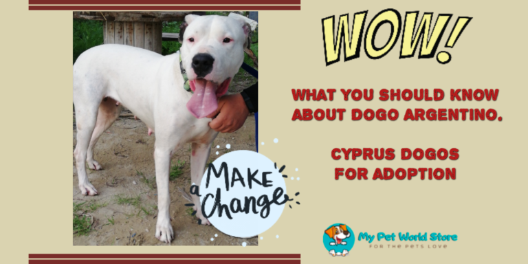 My Pet World Store What do you know about the Breed as Dogo Argentino? https://mypetworldstore.com/?p=18216